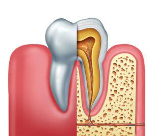 ساختمان دندان